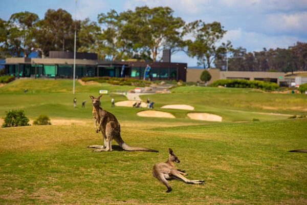The Growling Frog Golf Course + Restaurant